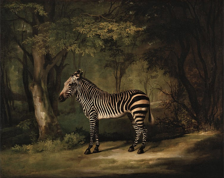 George Stubbs' (1724 – 1806), Zebra1763, oil on canvas, Yale Center for British Art
